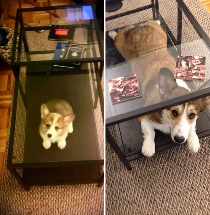 pets-before-after-35